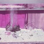 Aquarium, 1987