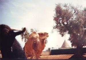 Zoo, 1987